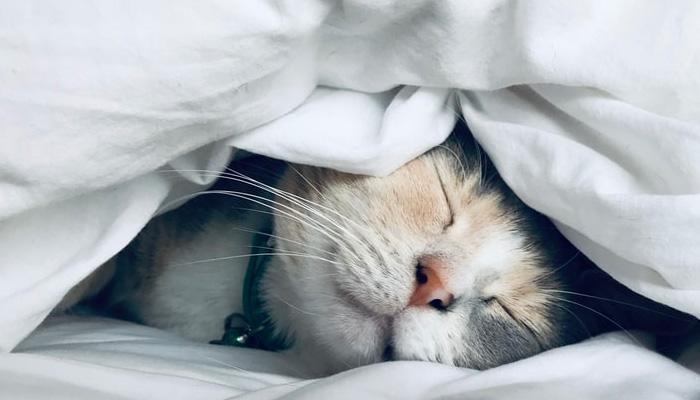 한숨 푸우우욱 자고싶다