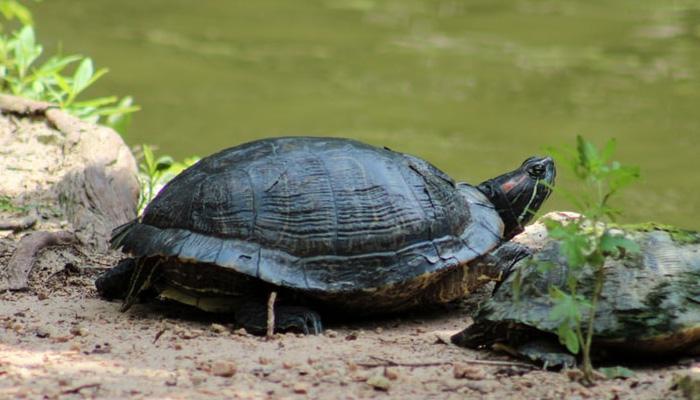 거북이 귀여워