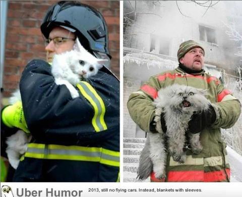 덴마크 고양이와 러시아 고양이의 차이