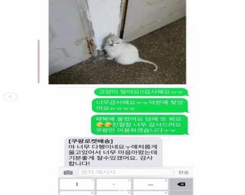 집나간 고양이를 발견한 쿠팡맨의 문자ㅎㅎ