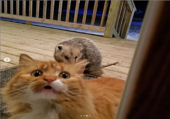 밥그릇 뺏겨 세상 억울한 고양이