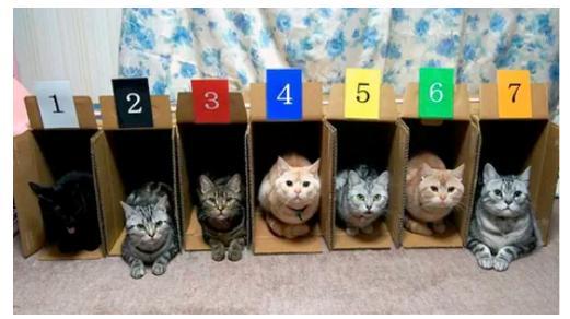 고양이는 경쟁을 싫어한다?
