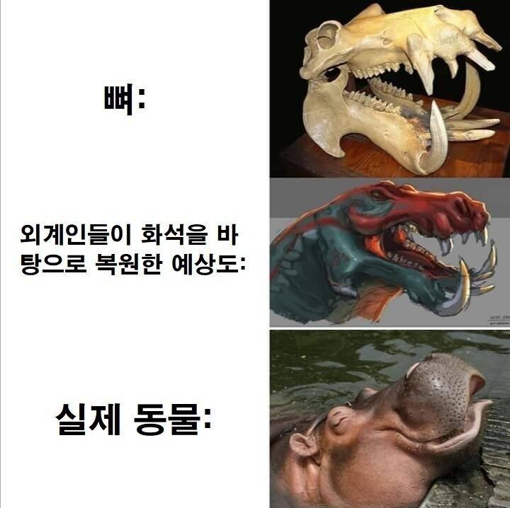 [유머] 하마의 뼈. -  와이드섬