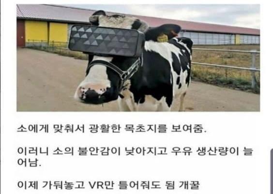 신선한 우유를 맛보기 위한 VR.