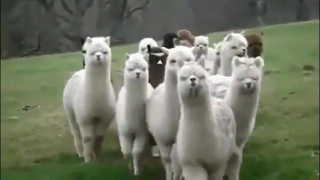 동물들의 공격