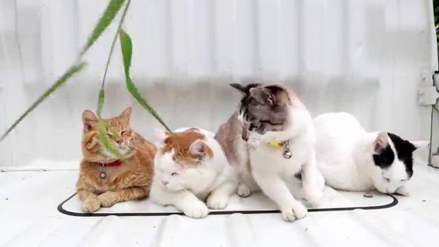 고양이 4마리
