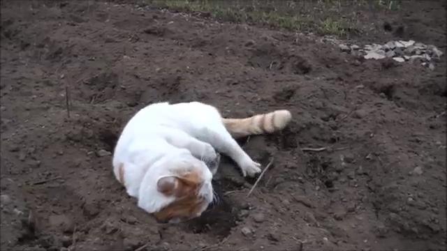 흙으로 샤워 후 대만족하는 고양이