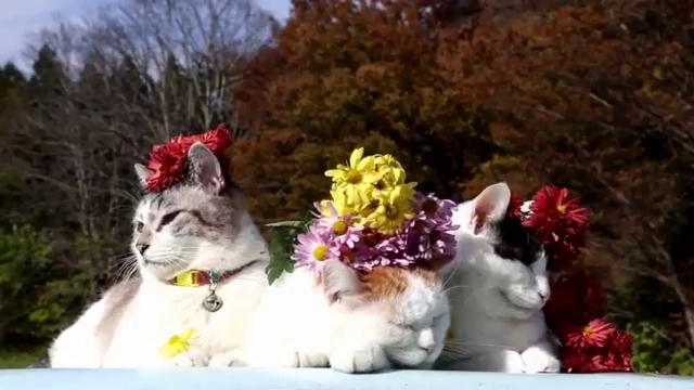 고양이와 꽃