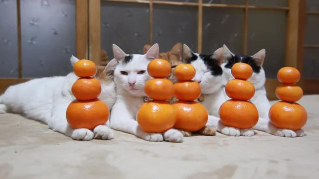 고양이 오렌지 탑