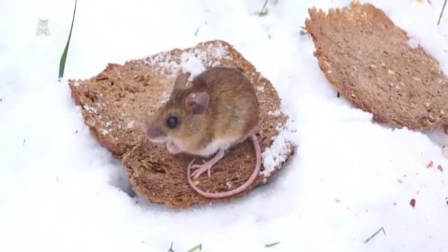 귀여운 쥐