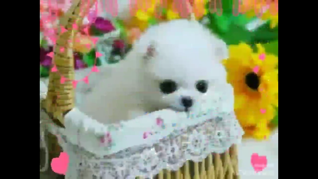 귀여운 강아지 모음