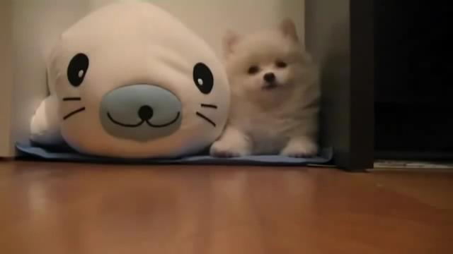 귀여운 강아지 머멍멍ㅁ엄ㅇ멍