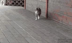게임 좀 할 줄 아는 고양이